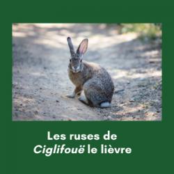 Les ruses de Ciglifouë le lièvre (4ème partie)