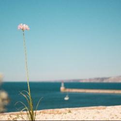 Pourquoi les meilleures vacances étaient à Marseille ?